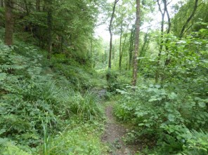 Tamar: Greenscoombe wood