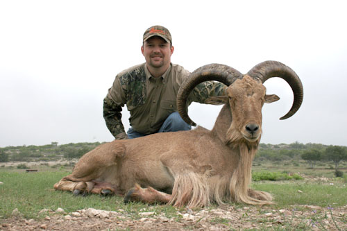 Aoudad Taken With Pistol In 2009
