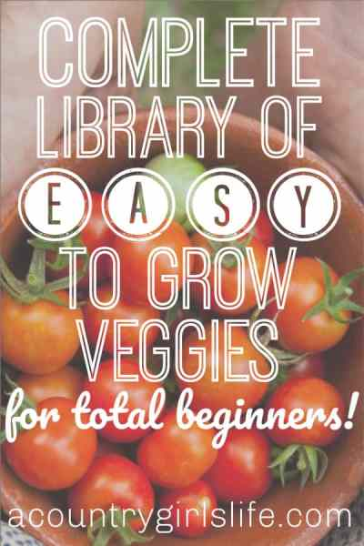 13+ Easy To Grow Veggies & Fruits for Absolute Beginning Gardeners