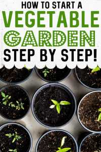 How to Start a Vegetable Garden for Absolute Beginners
