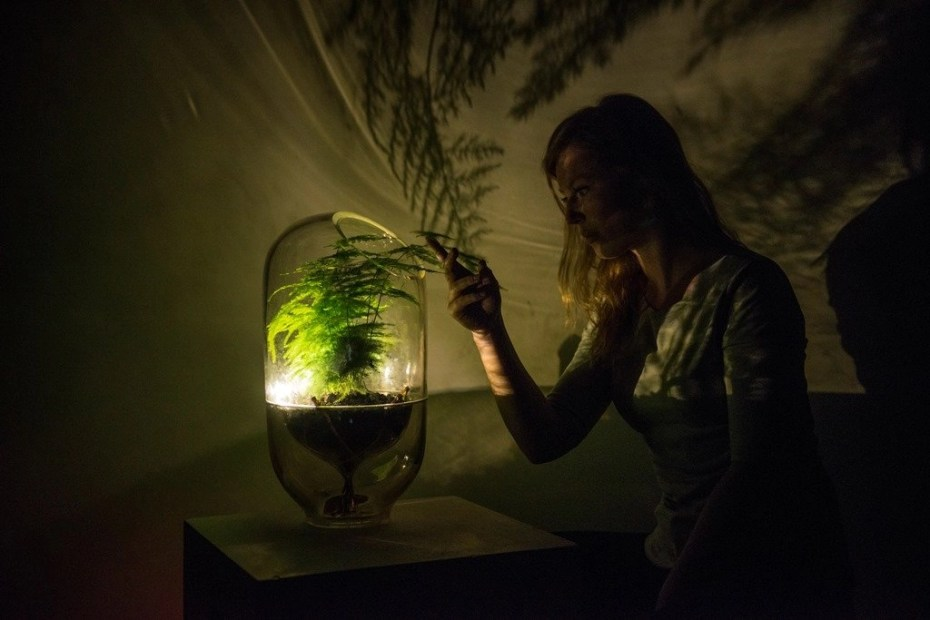 Plant e. la pianta che produce elettricità. Acquaponica.blog