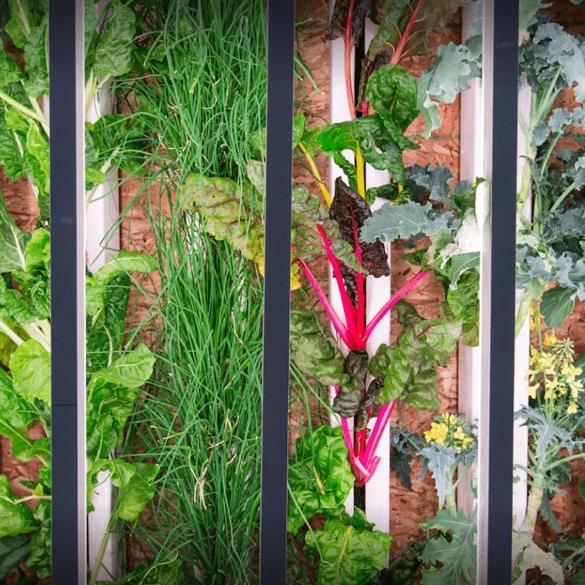 Agricoltura 2.0, acquaponica, idroponica e aereoponica. Acquaponica.blog, cibo bio e biologico