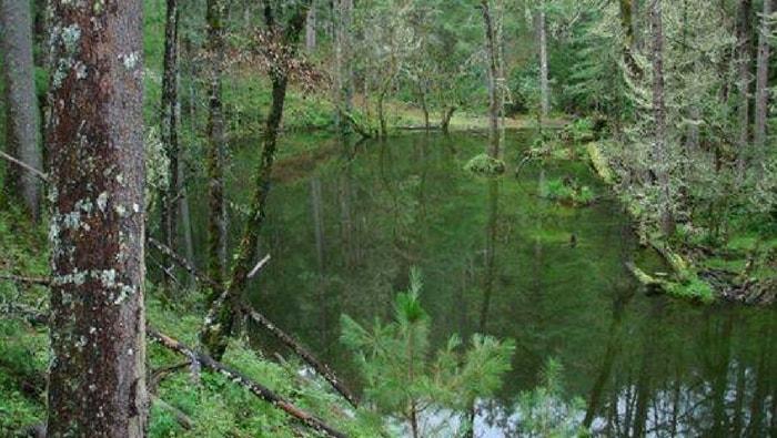Laguna de Patos: l'habitat naturale del poecilia wengei