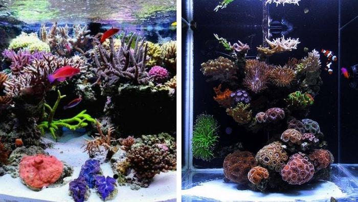 4 motivi per iniziare con un acquario marino più grande