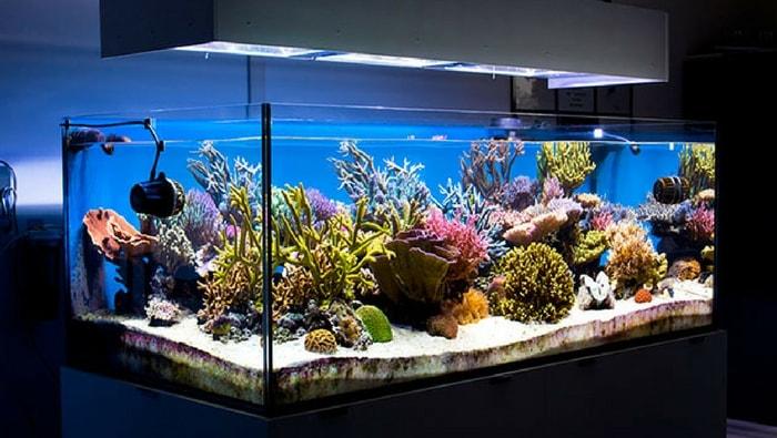 Quale illuminazione per acquario quale illuminazione per acquario