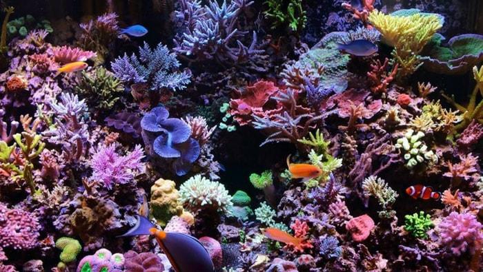 guida coralli sps