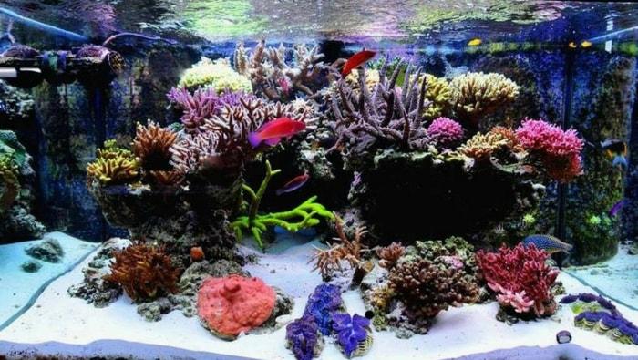 impostare un acquario marino