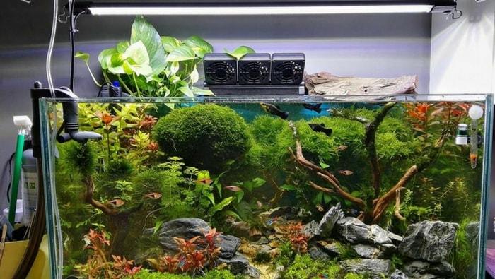 Inserire il Pothos in acquario: ecco come fare