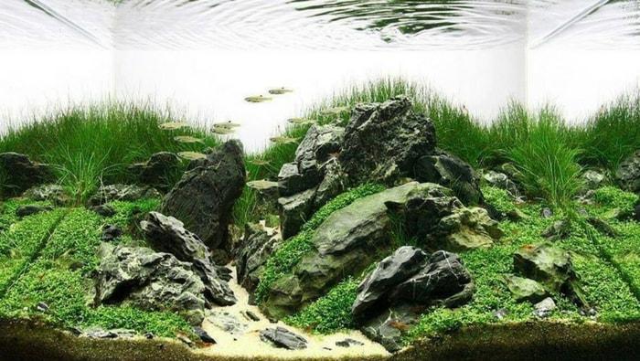 Rocce in acquario