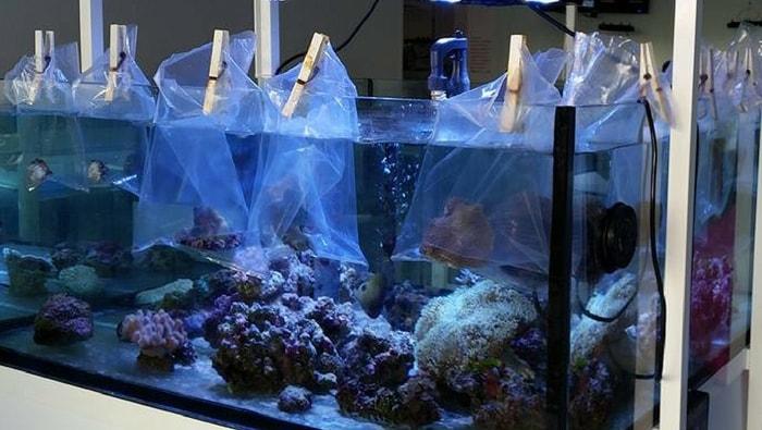 Coralli acclimatati in 4 semplici passi