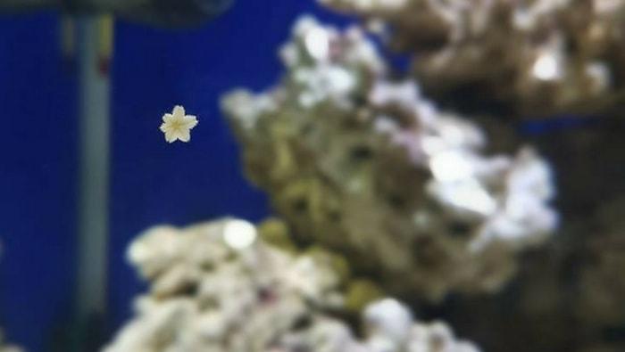 Il ciclo di maturazione dell'acquario marino