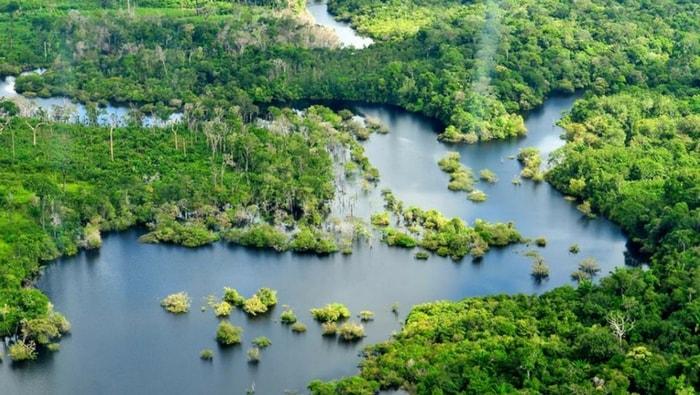 Il bacino Amazzonico: dove vive in natura il Discus