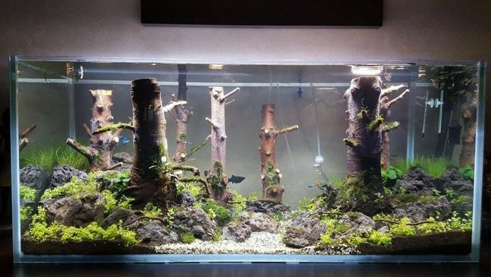acquario discus artigianale 3