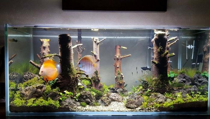 acquario discus artigianale 4