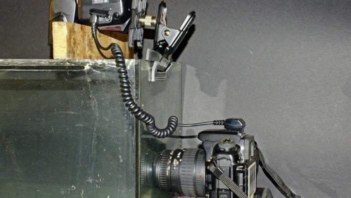 foto acquario - flash