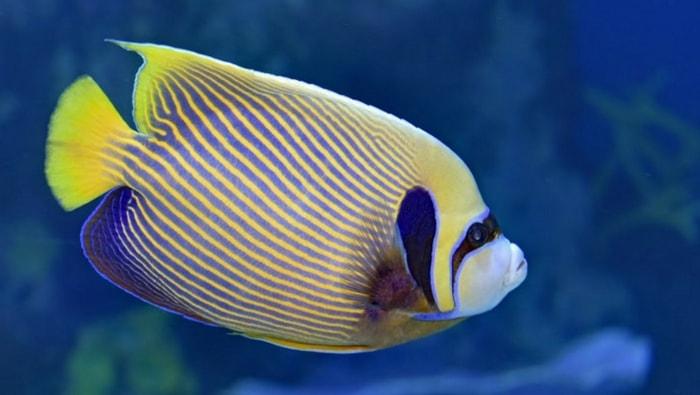 foto acquario - pesci