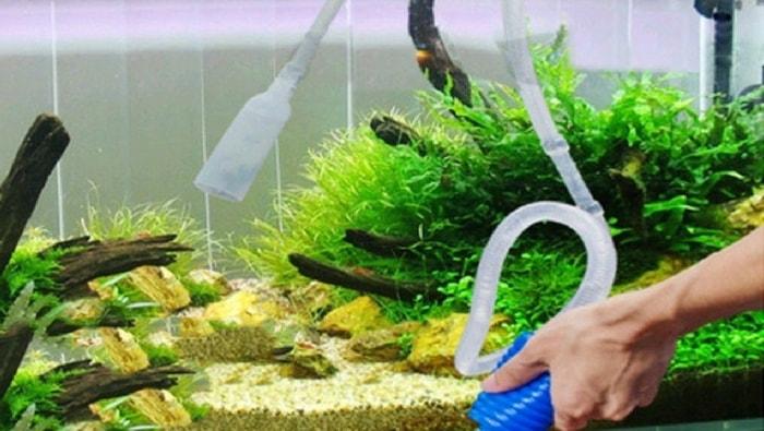 foto acquario- pulizia