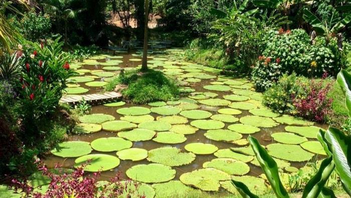 Uno scorcio di Amazzonia