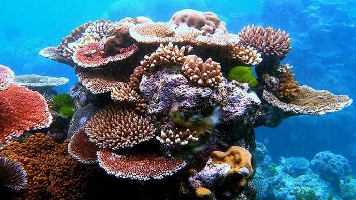 Biotopo marino: come ricreare un pezzo di oceano in vasca