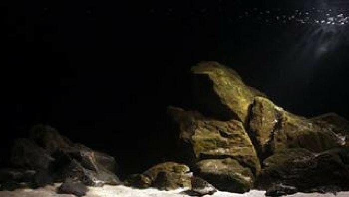 Acque bentoniche biotopo del lago Tanganica