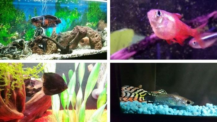 riconoscere un pesce malato
