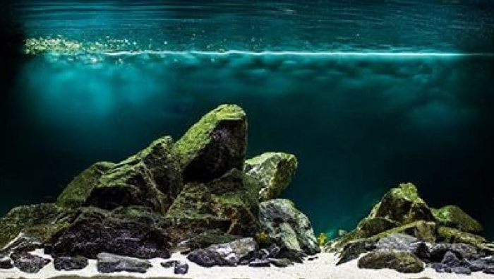 setup biotopo del lago tanganica