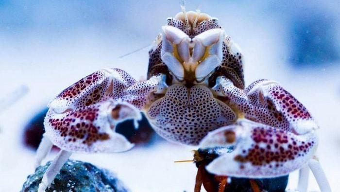 granchi in acquario marino