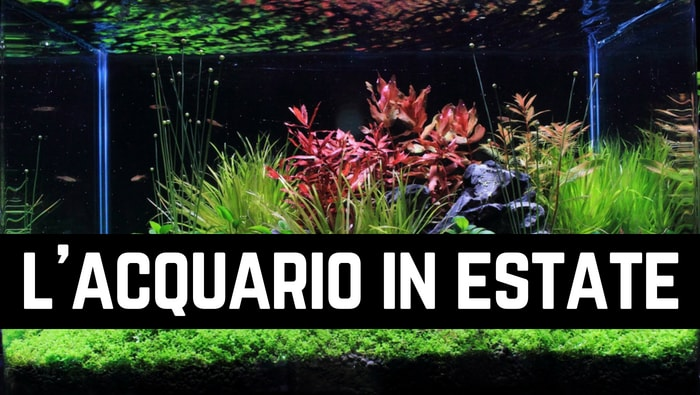 Temperatura dell'acquario in estate
