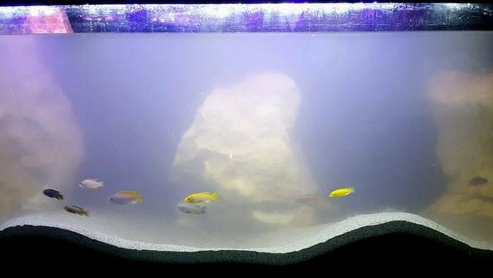 acquario opaco dopo i lavori