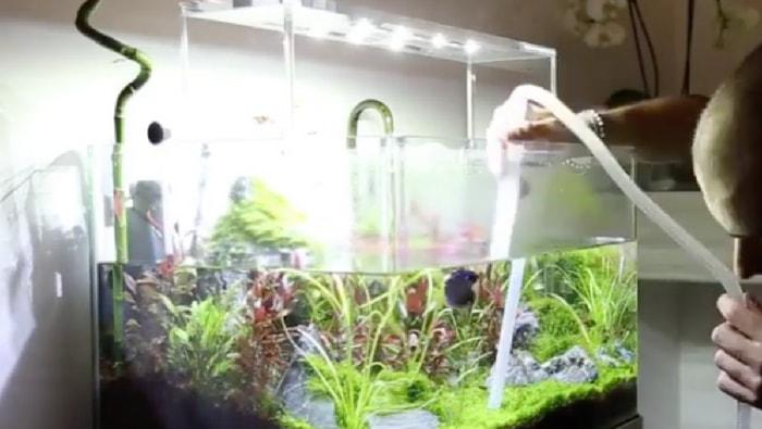 Manutenzione dell'acquario