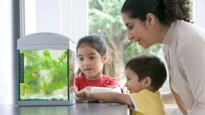 Quanto costa realizzare e mantenere un acquario d'acqua dolce?