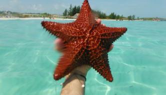 Stella marina: ecco perché se la incontri in spiaggia non devi toccarla