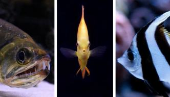 Alimentazione dei pesci: la vera differenza tra pesci erbivori, onnivori e carnivori