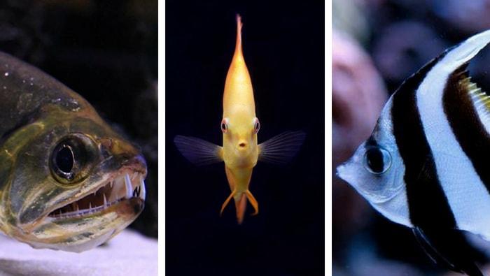 alimentazione dei pesci