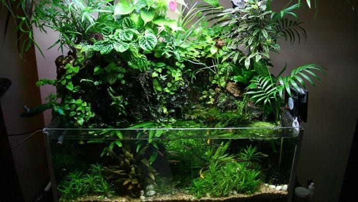 Piante da interno che puoi inserire in acquario, un aiuto in più dalla natura