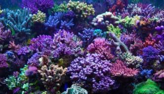 Fitoplancton e Zooplancton in acquario marino: ecco tutti i vantaggi