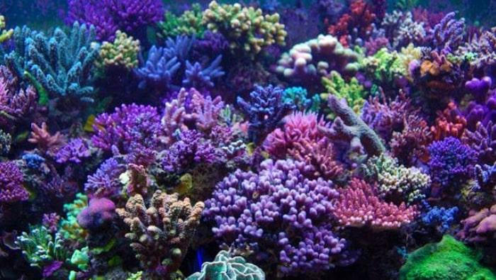 fitoplancton e zooplancton in acquario marino