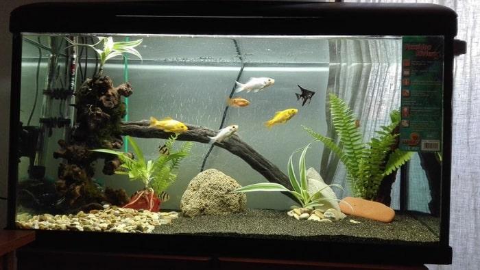 Pesci tropicali e pesci rossi