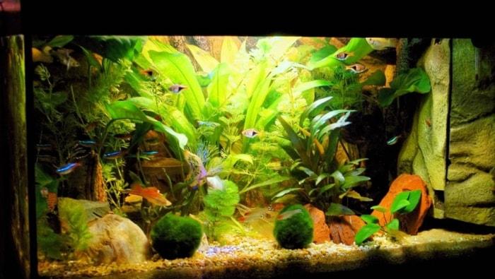 acquario monospecifico