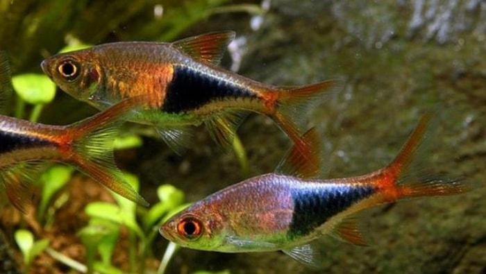 pesci che si nascondono