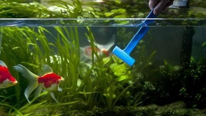 pulire i vetri di un acquario raschietto