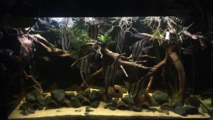 acquario tropicale acqua dolce del contest inkbird