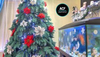 Regali di Natale da donare ad un acquariofilo