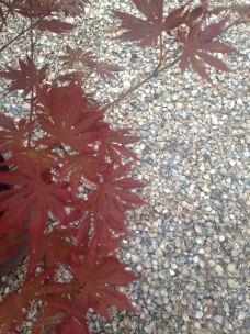 seaside garden in the suburbs - shells in the garden instead of pebbles or stones (24)