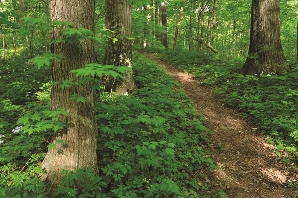 Photo of Edna W. Spurgeon Woodland Reserve