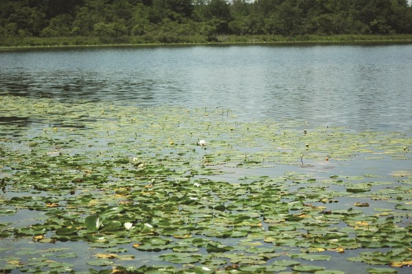 Photo of Detering Nature Preserve