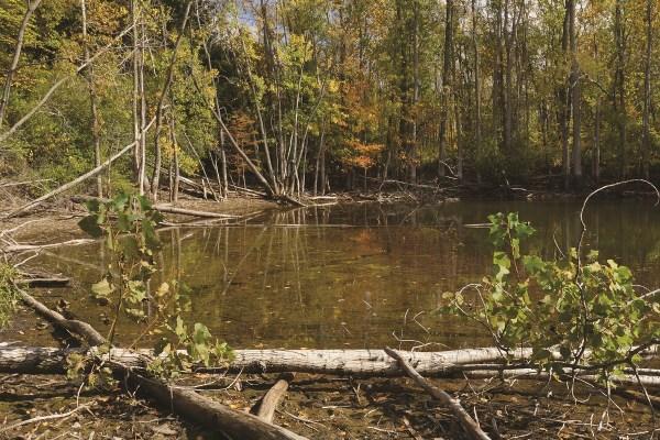Photo of Little Wabash River Nature Preserve