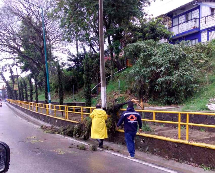 Como resultado de las lluvias registradas durante la madrugada y la tarde de este miércoles, la Dirección de Protección Civil Municipal reportó un árbol caído en la calle Bolivia, así como afectaciones en una vivienda de la colonia Lomas de Casa Blanca.