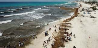 De acuerdo con el gobierno municipal de Benito Juárez en Quintana Roo, la Secretaría de Marina solicitó los primeros 23.8 millones de pesos para el retiro de sargazo en aguas someras de la costa de Cancún.