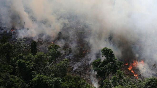 La Amazonia es la mayor región de bosque tropical del planeta. Desde 1970 se ha perdido solo en Brasil una superficie forestal más grande que toda Francia. La ganadería ha sido la responsable de la mayoría de esta deforestación.